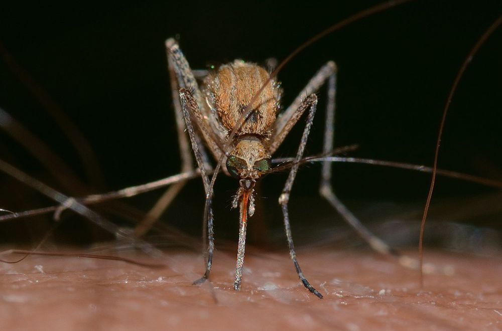 West-Nile-Virus Infektion